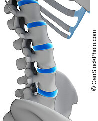 Human intervertebral disks - 3d rendered illustration -...
