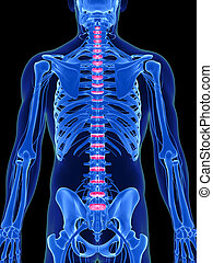 Highlighted intervertebral disks - 3d rendered illustration...