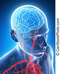 Male brain - 3d rendered illustration - male brain