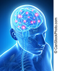Human active brain - 3d rendered illustration - active brain