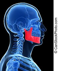 Male jawbone - 3d rendered illustration - jawbone