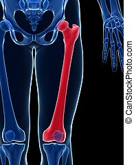 Male femur - 3d rendered illustration - the femur