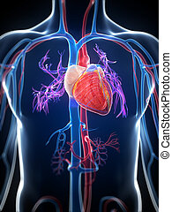 Highlighted human heart - 3d rendered illustration of the...