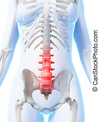 Highlighted lower spine