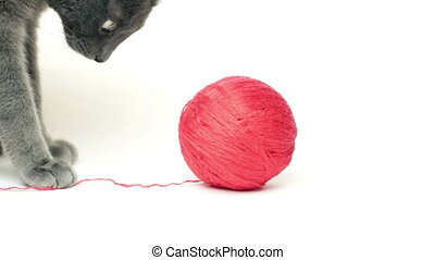 cat playing with red ball on white background