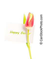A tulip with a happy easter card on a white background