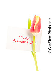 A tulip with a happy mothers day card on a white background