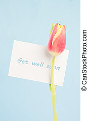 A beautiful tulip with a get well soon card on a light blue...