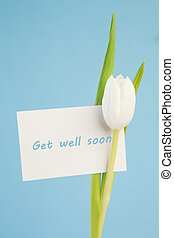 White tulip with a get well soon card on a blue background...