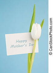 Close up of a beautiful white tulip with a happy mothers day...