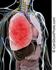 Pneumonia - 3d rendered illustration of pneumonia