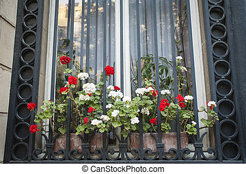 Flower box and barred window in Paris, France