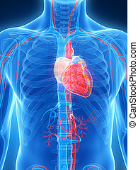 Human heart - 3d rendered illustration of the human heart