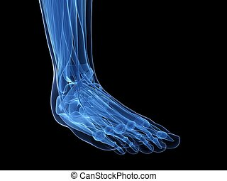 Human foot - 3d rendered illustration of the human foot
