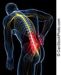 dolor de espalda, macho