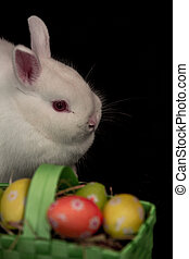 Easter bunny with green basket of eggs on black background
