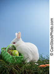 White bunny rabbit sitting on grass with basket of eggs on...