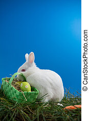 Fluffy bunny rabbit sitting on grass with basket of easter...