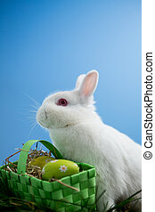 Fluffy bunny rabbit sitting with basket of easter eggs on...