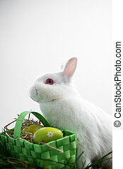 Easter bunny rabbit sitting with basket of easter eggs on...
