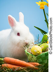 White bunny sitting beside easter eggs in green basket and...