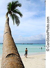 beach- tree - coconut tree in the beach