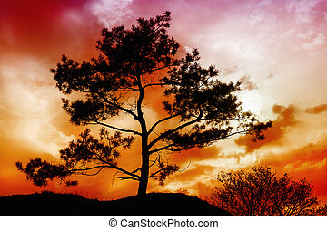 Tree Sunset