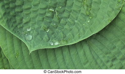 Rain on Leaves 4