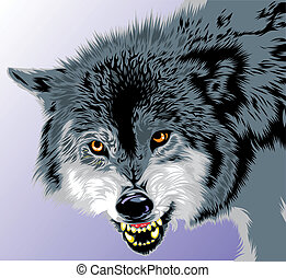 gray wolf - wolf with fangs on the gray background