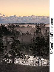 Trees in mist in a marsh