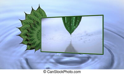 Montage of drop falling from a leaf