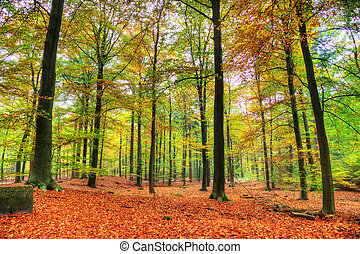 Forest in autumn - Beautiful autumn forest in national park...