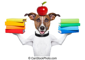school dog - dog going to school balancing books and apple