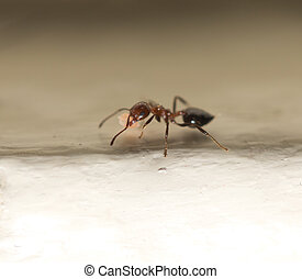 ant with food macro