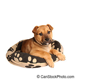Mastiff puppy lying on a dog bed - A mastiff puppy lying on...