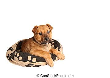Mastiff puppy lying on a dog bed - A mastiff puppy lying on...