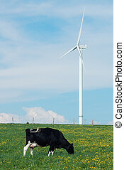 cow eating near a windturbine - a cow eating near a...