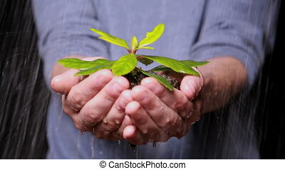 Hands holding seedling in the rain to promote...