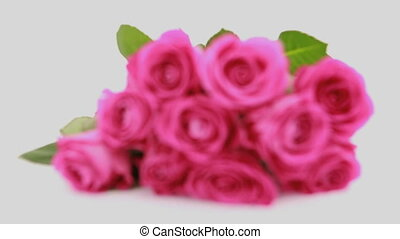 Focus on pink roses as a gift - Focus on bouquet of pink...