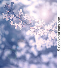 Cherry tree blossom - Photo of beautiful cherry tree...