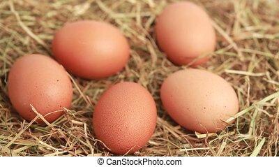 Hand taking chicken eggs - Hand taking five chicken eggs