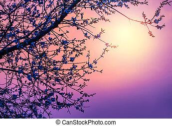 flor, cereja, sobre, roxo, pôr do sol