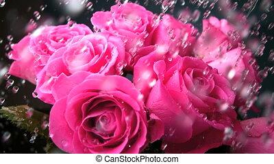 Blomstrar, långsam, rörelse, existens, watere