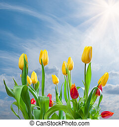 Tulips on blue sky background