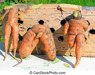 family - Different ridiculous figures of people from carrots