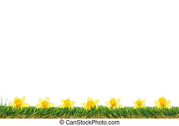 Spring Borders - Daffodils on Grass - Yellow flowers frame...