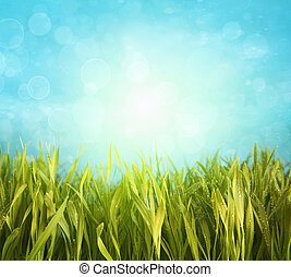 Fresh spring grass with blue sky