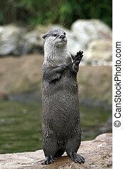 ondulación, Otter?