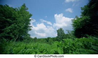 Grass field under blue sky with clouds, motion close to ground