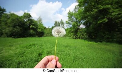 Hand holds dandelion at background of grass field and forest